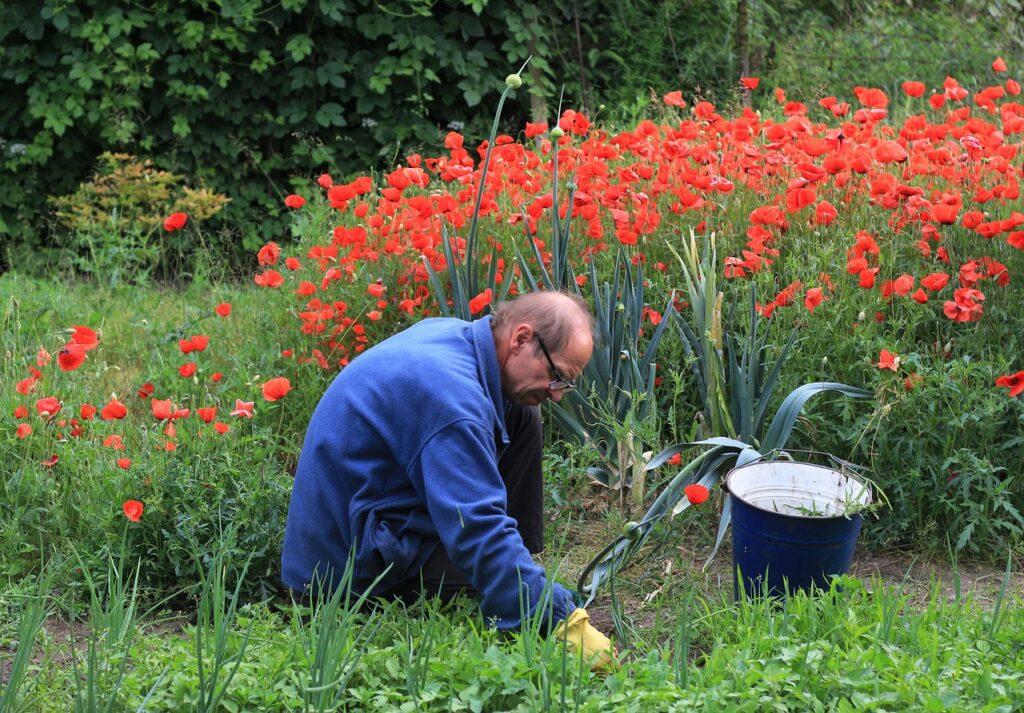 Jak stworzyć ogród - czas na sadzenie i pielęgnację