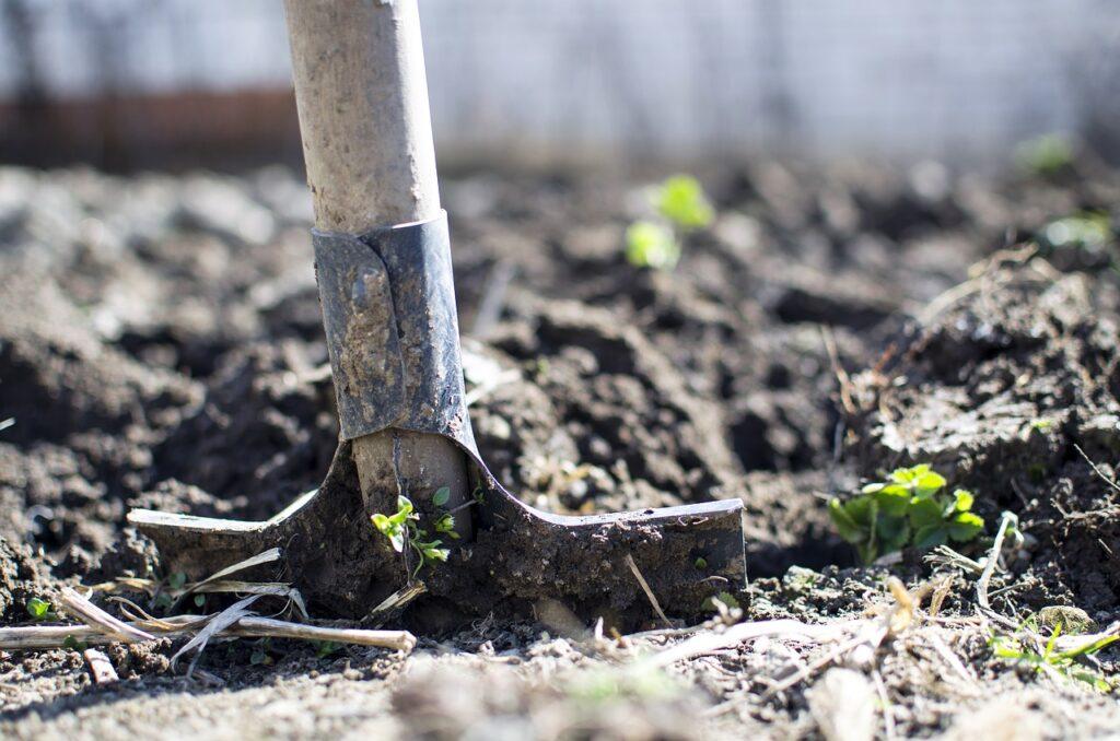 Jak założyć ogród przydomowy