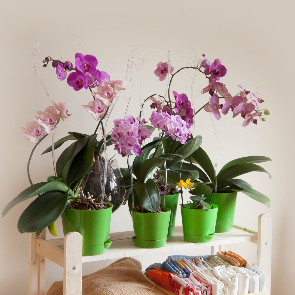 Jak zrobić stojak na kwiaty do domu